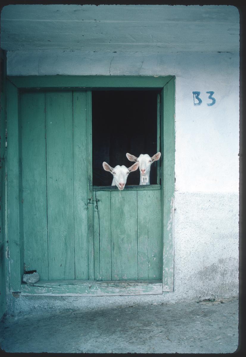 PHOTO©Y.Cuillandre-592